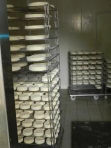 Camembert Ferme des Aulnays
