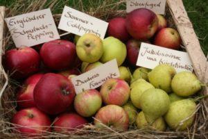 Sommeräpfel