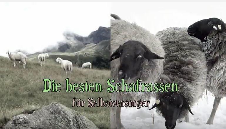 beste Schafrassen youtube