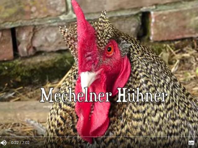 hoeck-mechelner
